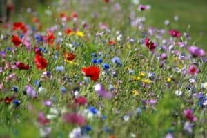 5 fleurs de Bach pour le printemps